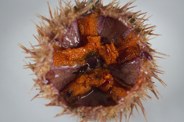 sea urchin roe inside