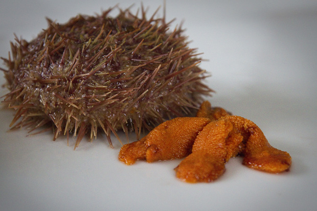 Green sea urchin and roe